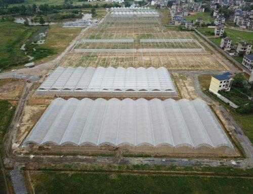 China Agro-Park in Full Swing