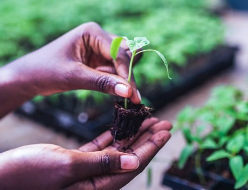 PAC Creating Food Safety Solutions for Ghana